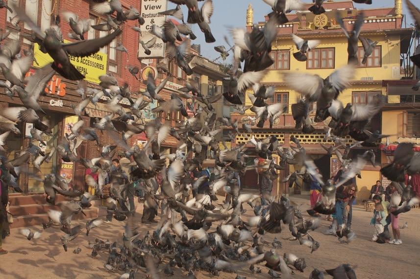 Tauben auf einem Platz in Kathmandu